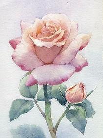 水彩画・花「薔薇 」福井良佑