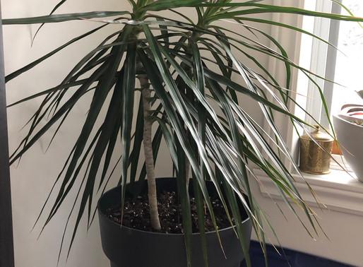 Plantes qui purifient l'intérieur