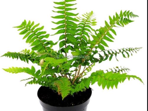 Comment entretenir vos plantes, trucs et astuces!