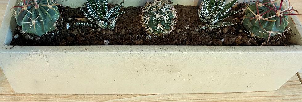 Jardinière cactus et succulents