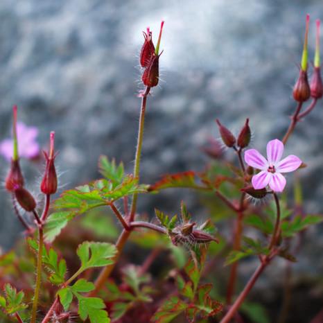 Wee Flower