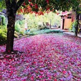 Beautiful Leaves.jpg