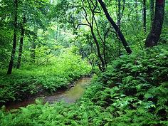 Elohee creek view.JPG