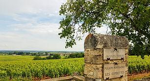 Burgundy vineyards wine tasting