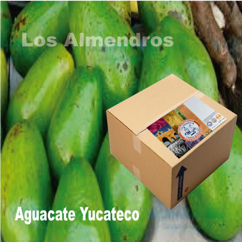Aguacate Yucateco 10kg