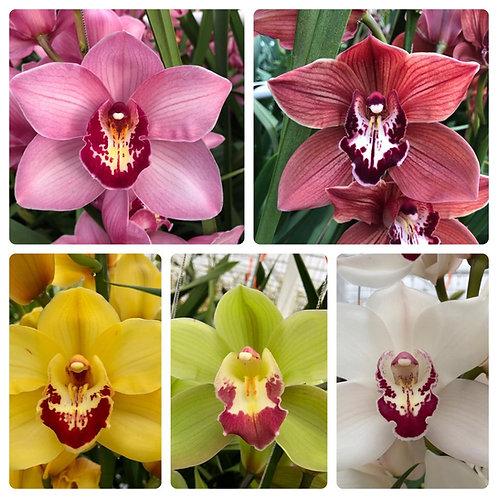 Twee orchideeëntakken 80 cm (keuze uit 5 kleuren takken)