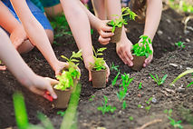 Children's hands planting young tree on