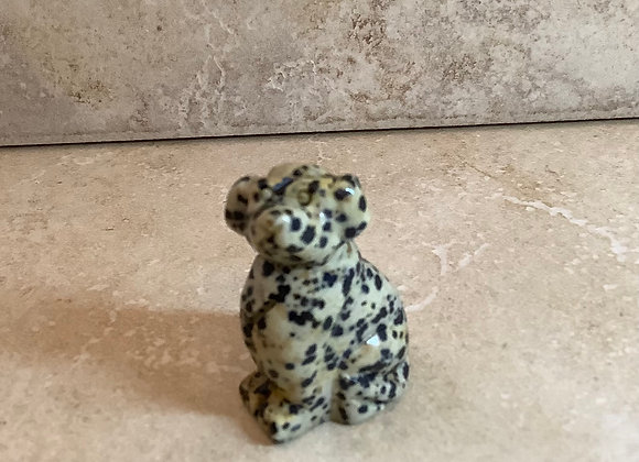 Dalmatian Jasper Dog