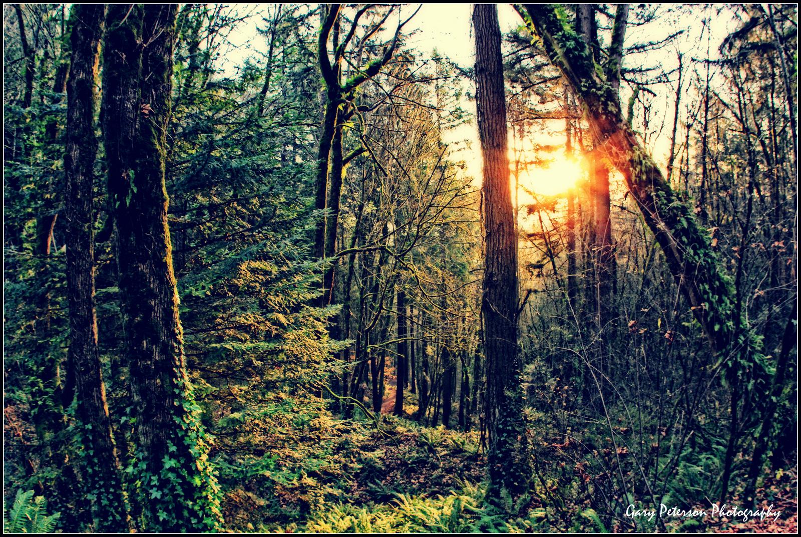 125-1-Pittock Forest .jpg