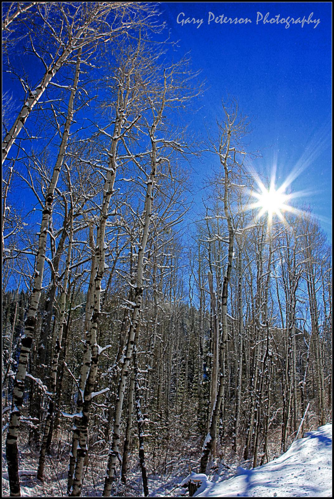 1-Sunny Trees in Snow .jpg