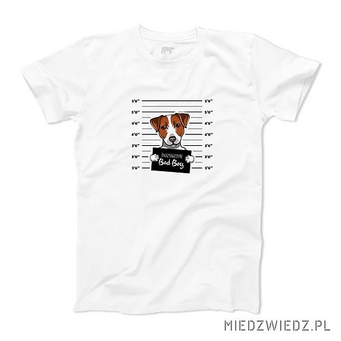 koszulka - BEAGLE - BAD BOY