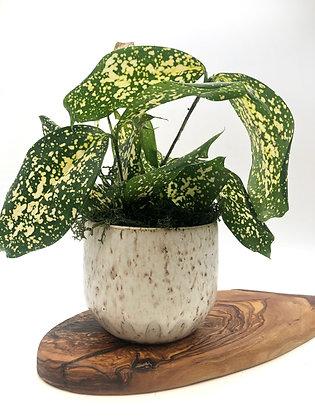 Speckled Starter Planter