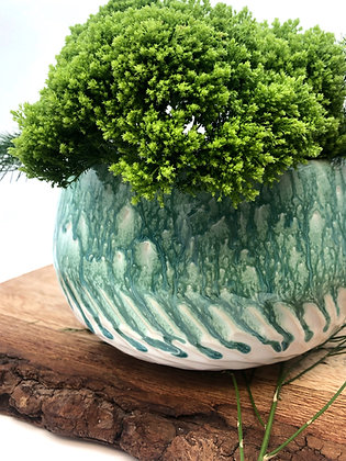 Thrive Planter
