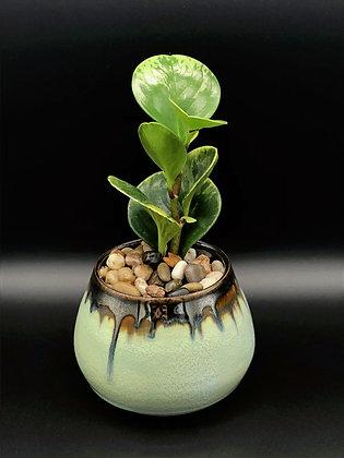 Palladium Planter