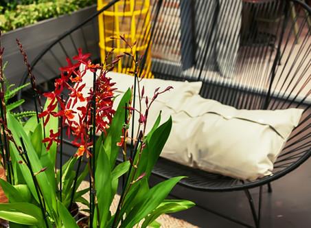 Plantas harmonizam e embelezam os ambientes