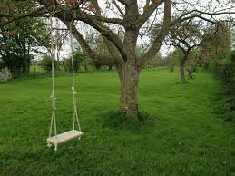 tree swing.jpeg
