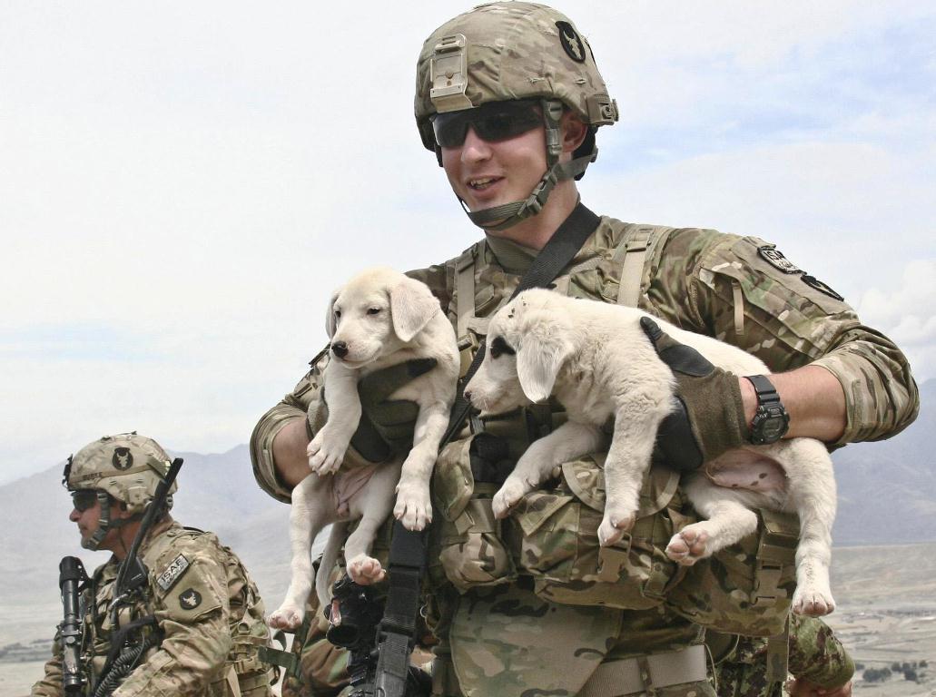 military_dog_week_101812