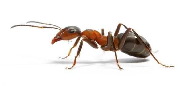 Got Ants? Call 859-314-2387