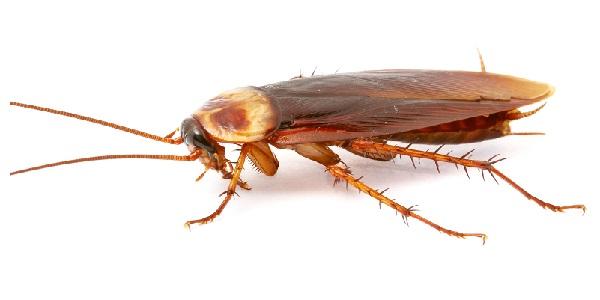 Got Cockroaches? Call 859-314-2387