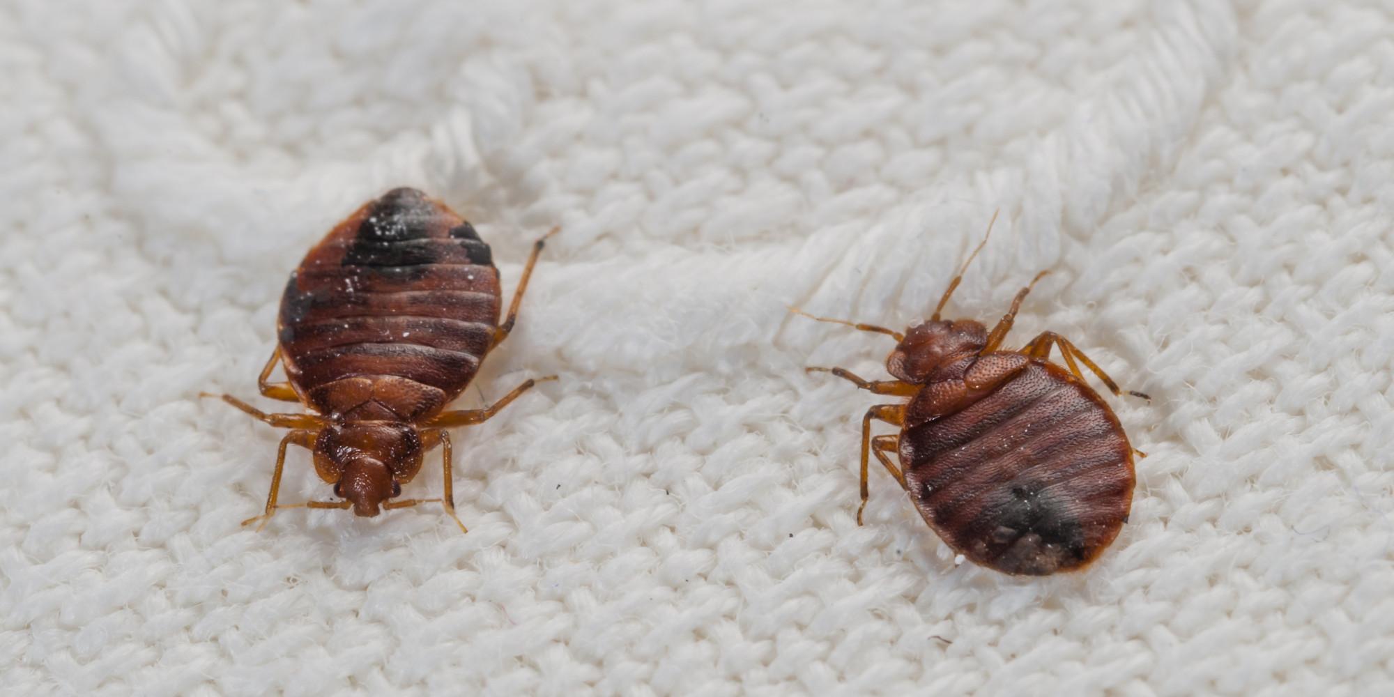 Got Bedbugs? Call 859-314-2387