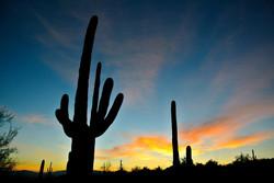 arizona-saguaro-sunset