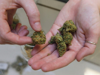 Update: California Legislature sends medical marijuana bills to gov's desk