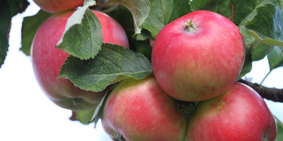 Njut av Äppledagen & Nääs Höstmarknad / Enjoy The Appleday & Nääs Fall-market  (1)
