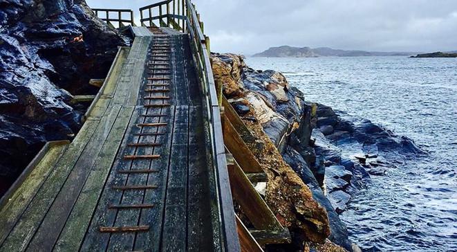 dyroledenvidhavet.jpg