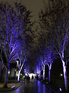 Lights 18.jpg