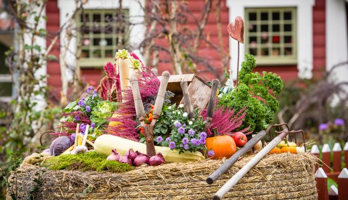 Skordefest-Day-2-2509-1024x683.jpg