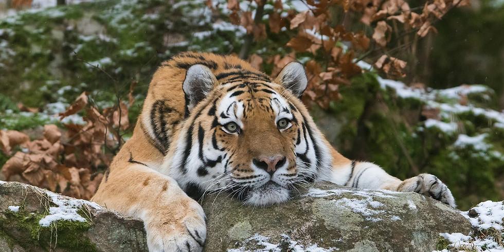 Daytour to Nordens Ark - Visit endangered species in amazing zoo!