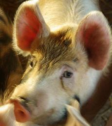 grisen.jpg