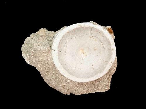 Otodus obliquus vertebra