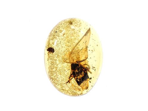 Escarabajos en Copal