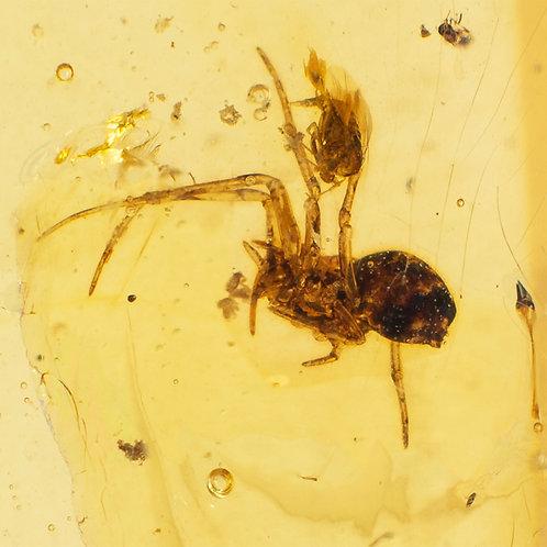 O. Araneae y O. Diptera en Copal