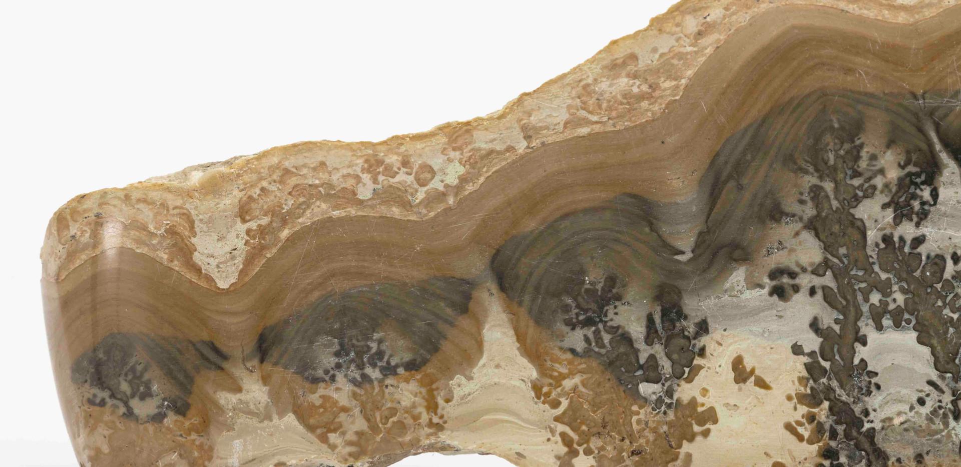 Estromatolito