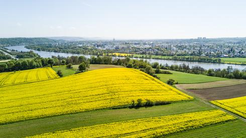 Rapsfelder vor Regensburg
