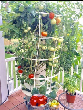 Tower Garden Facts and Fun