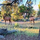 Wildlife at the South Rim