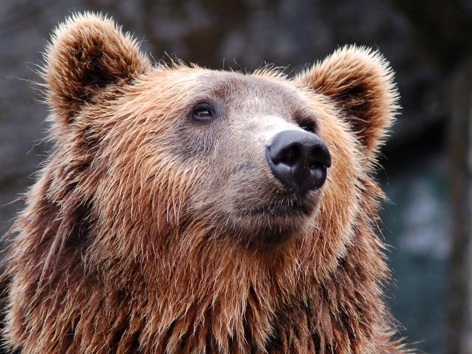 """Alistair MacLean """"Wyspa niedźwiedzia"""""""