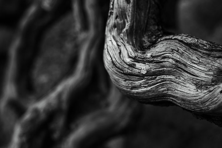 LAURINCROSBYPHOTOGRAPHY2021-8891-2.JPG