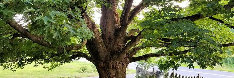 tree header.jpg