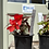 Thumbnail: Begonia trailing collection
