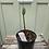 Thumbnail: Hedychium densiflorum 'Assam Orange'