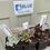 Thumbnail: Succulent collection five fabulous succulents.