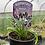 Thumbnail: Agapanthus 'Poppin Purple'