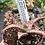 Thumbnail: Aloe 'Cleopatra'