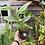 Thumbnail: Hedychium coronarium 'The White Ginger lily'