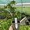 Thumbnail: Ficus carica 'Ice Crystal'