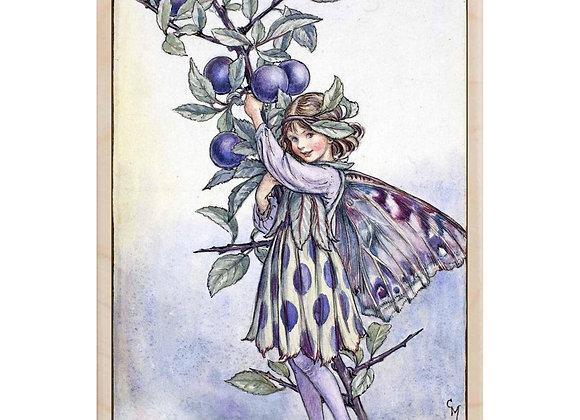Sloe Fairy
